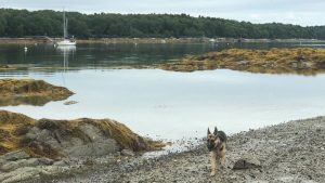 Sophie and Artemis in the Goose Islands, Casco Bay
